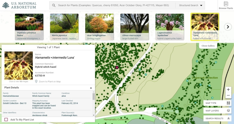 Arboretum Plant Explorer (ABE): interactive map and plant finder